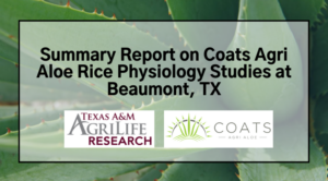 Summary Report on Coats AgriAloe Rice Physiology Studies at Beaumont, TX