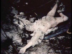 darlene-trippi-murder-scene2