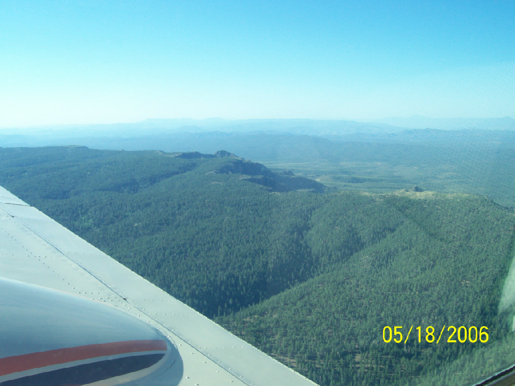View of the forest from inside the airplane.