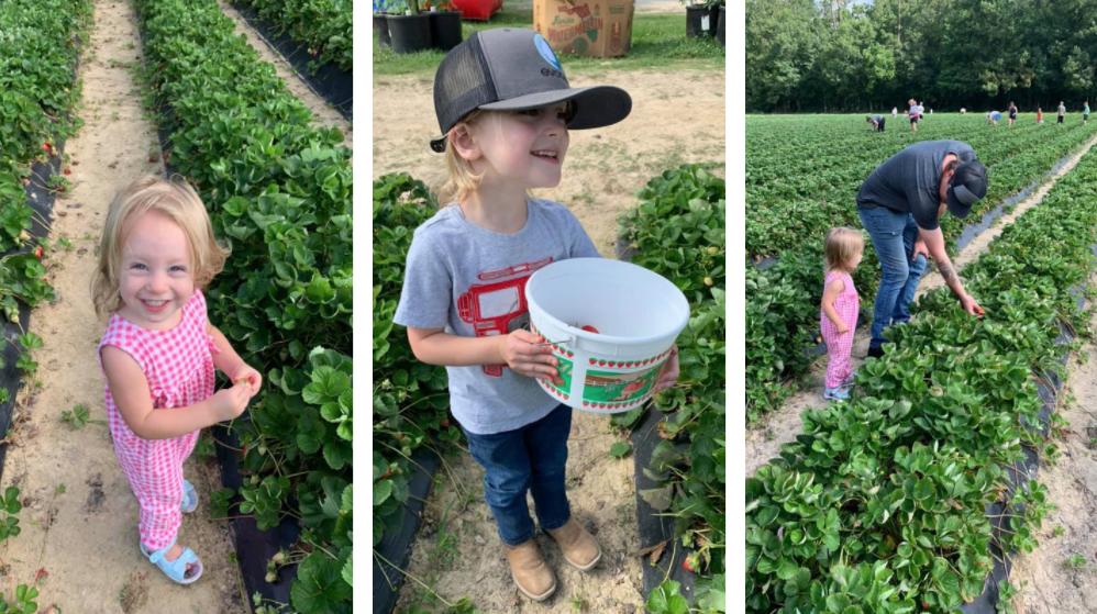 Strawberry & Blueberry picking