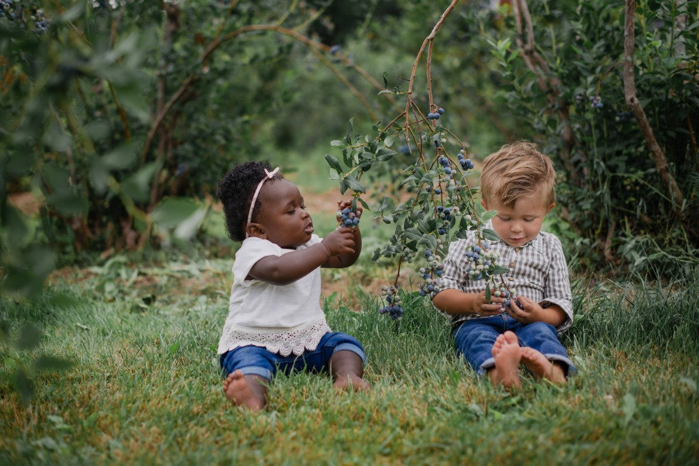 Louisiana Blueberry picking