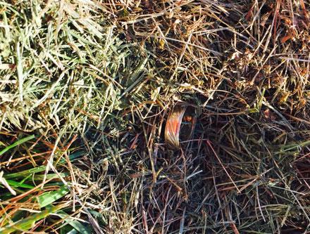 lost ring at soccer field