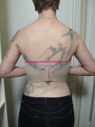 Here is an image of the back. The pink line is where the top of my normal bra band sits. The blue line is where the Deco strapless sits after a full day of wear and never yanking it up. (Imagine that both these lines are curved a little to follow the body's contours, not straight across.)