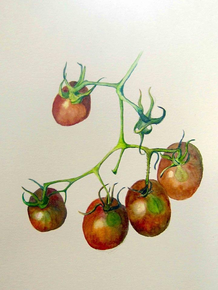 c tomatoe final