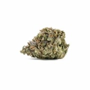 A bud of Giving Tree Dispensary's Death Star strain, for sale now online