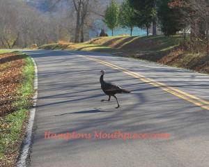 turkey crossing the road