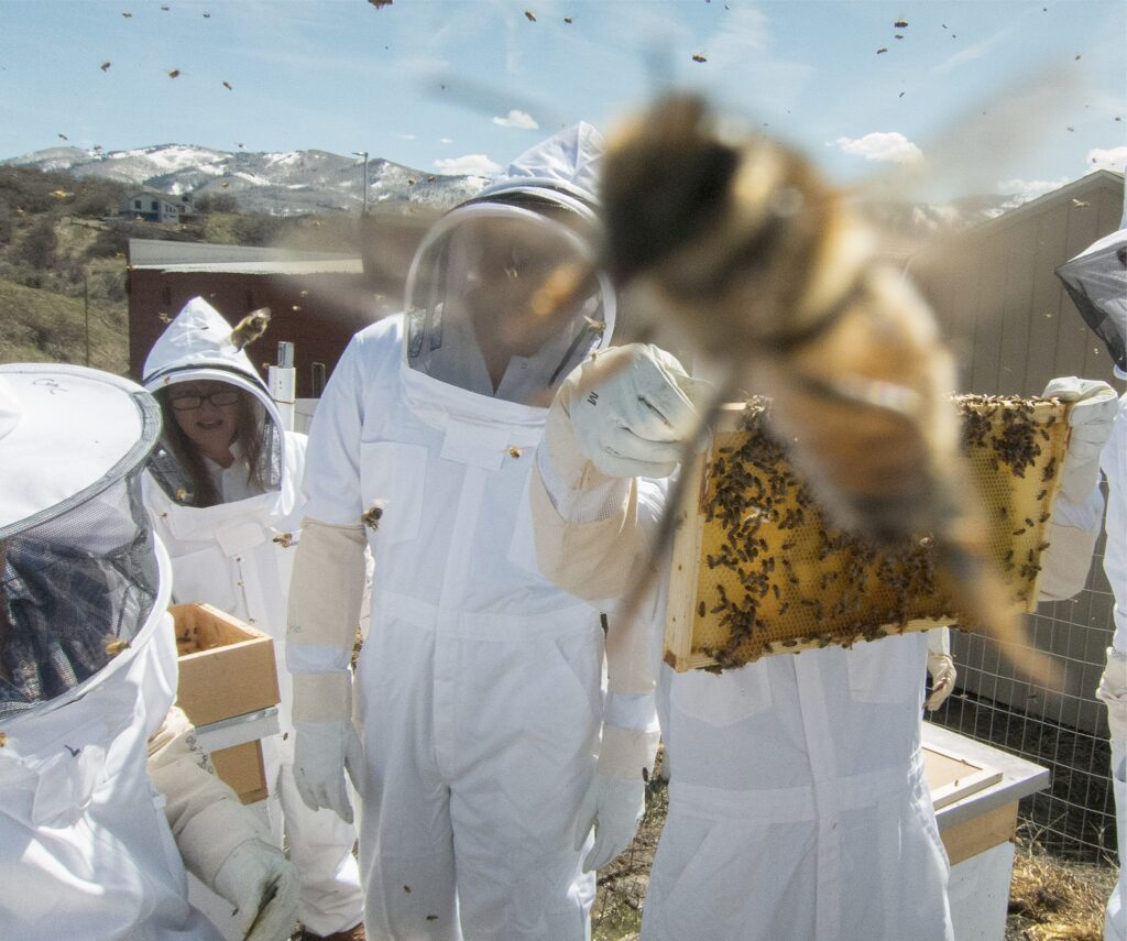 Student Beekeeping Club at work with hives