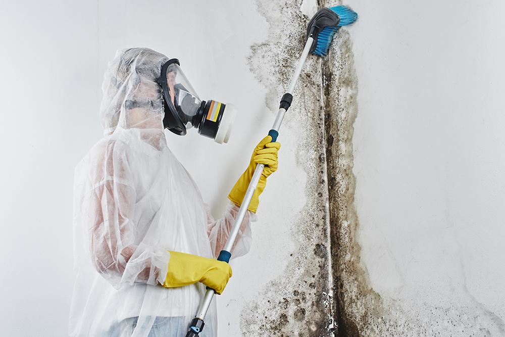 Mold Mitigation Services