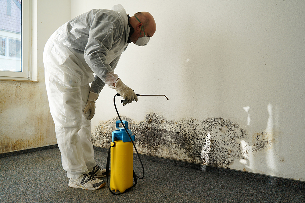 Expert Mold Remediation Specialists on Standby
