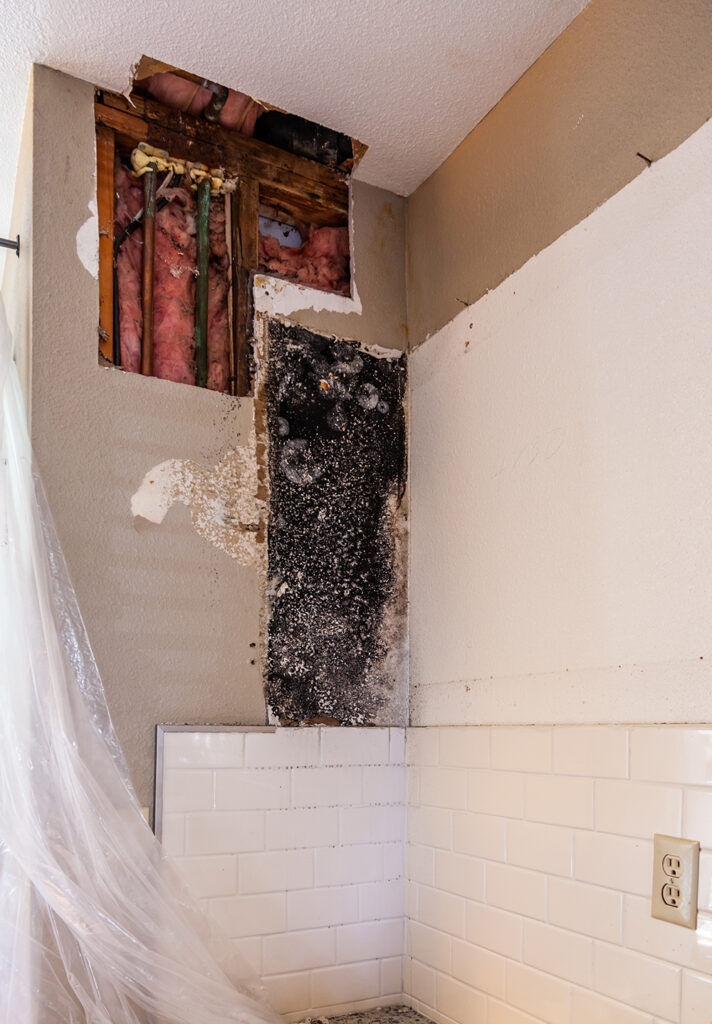 Mold Remediation is the key to protecting your health