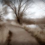 "Print Special Effects Third Place, Russ Dohrmann, ""Mystical Path"""