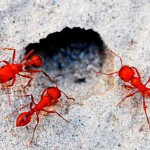 """Digital Open Honorable Mention, Brian Hooker, """"Ants"""""""