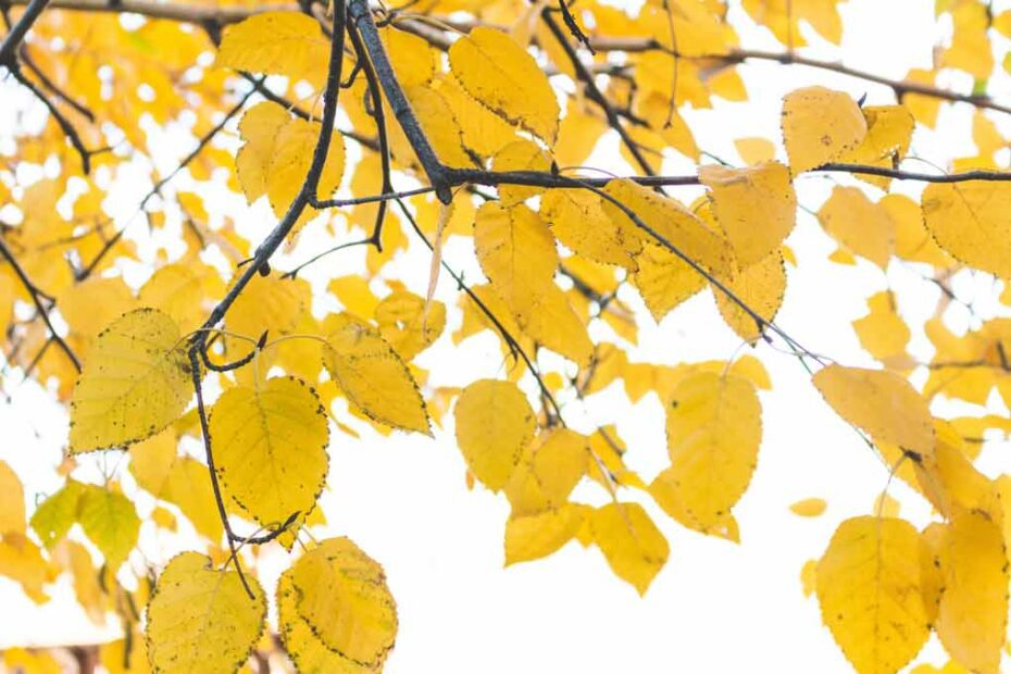Leaves on a tree branch