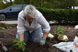 A woman planting in the ground
