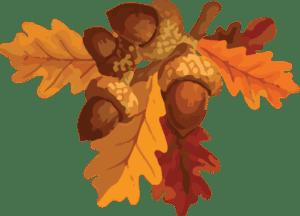 Illustration of an acorn bundle