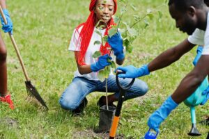 A woman planting a tree in the Fall ReLeaf program
