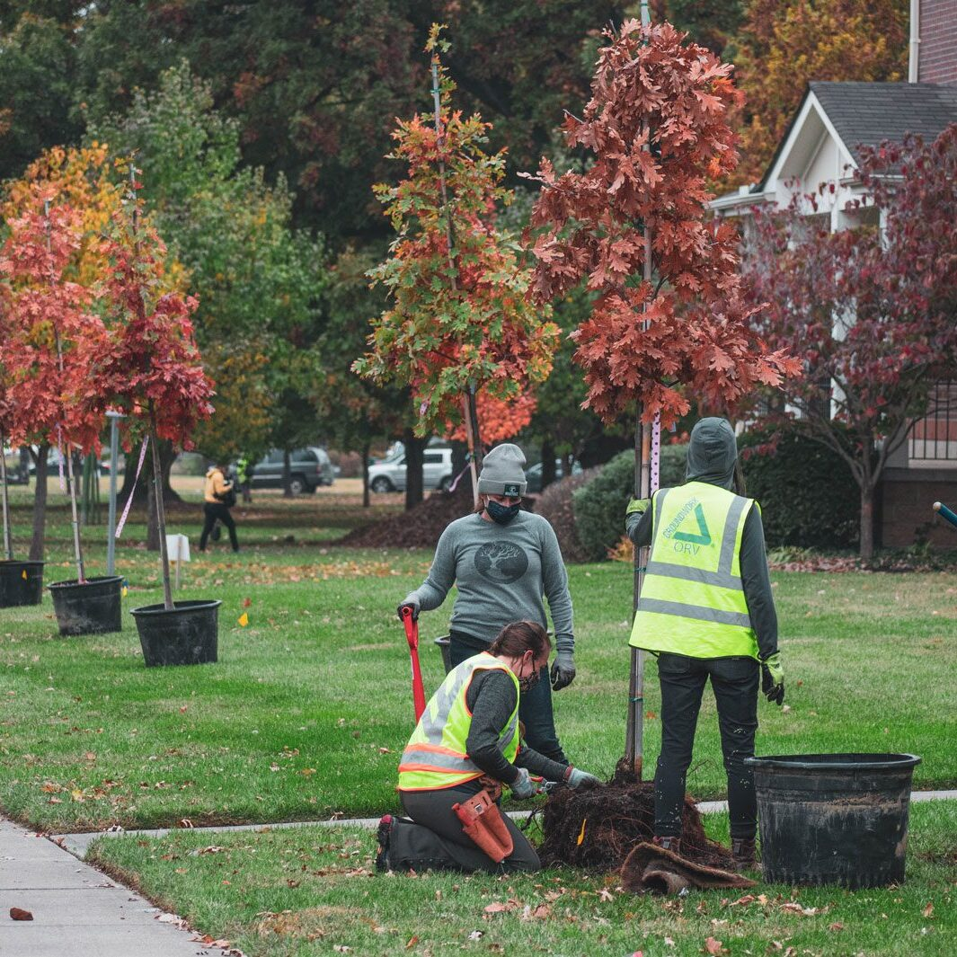 People standing beside new trees that line Ezzard Charles Drive
