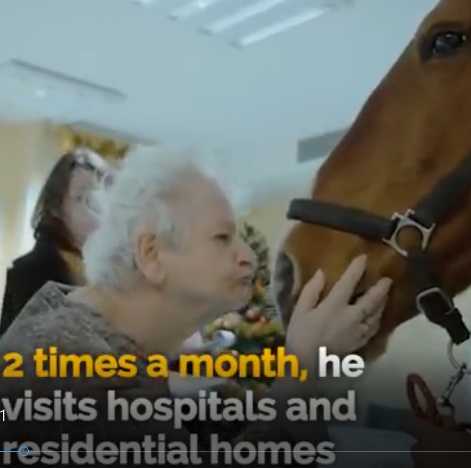 A horse and an old lady