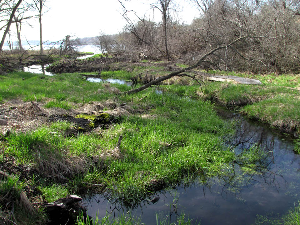 Assembly Creek & Springs 5-5-13 lower spring