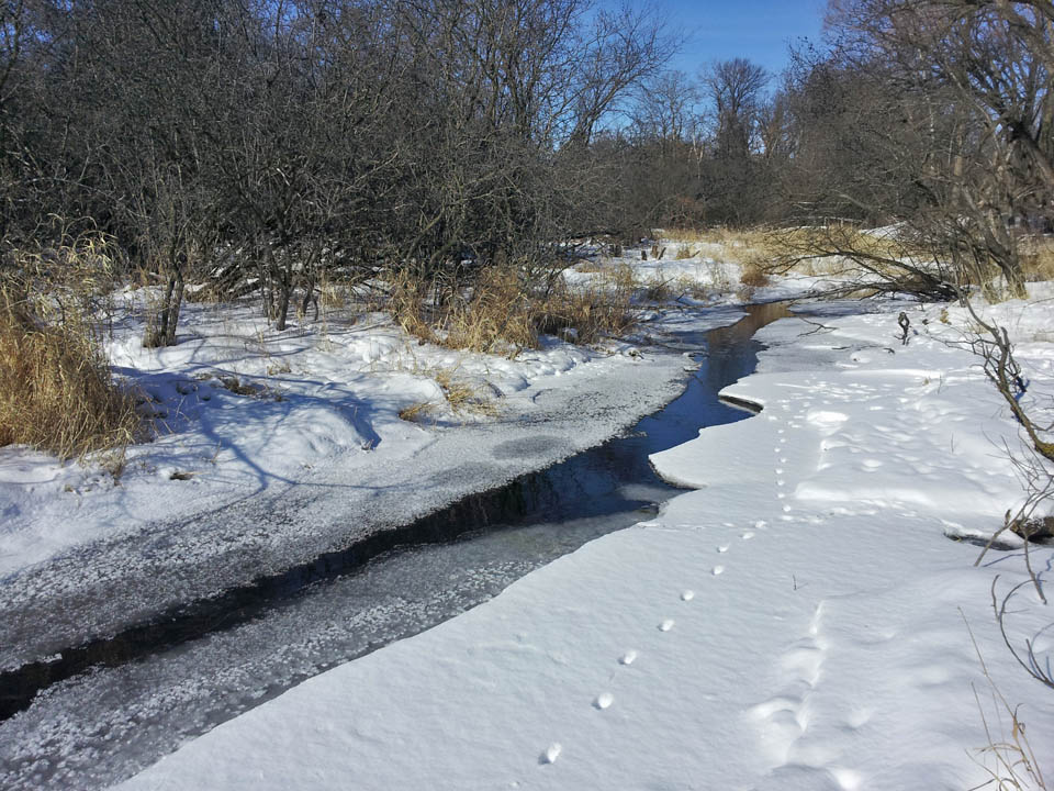 Assembly Creek & Springs - winter 20140129_113846