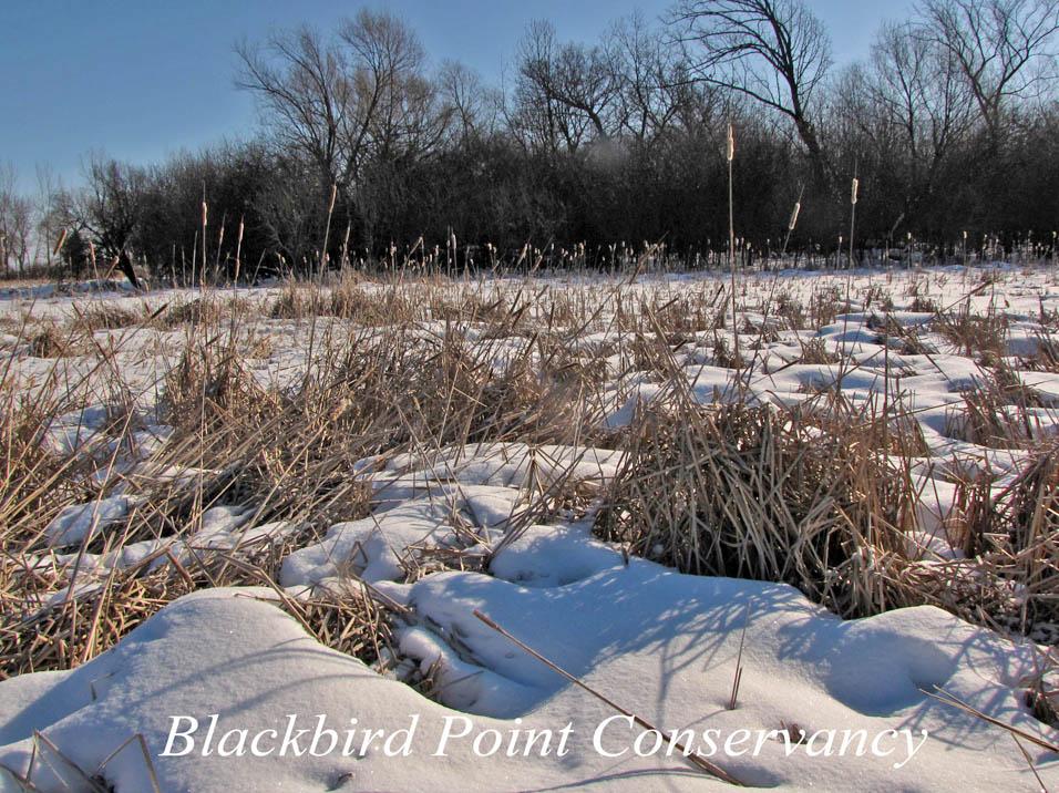Blackbird Point2a 2-25-10 w label A