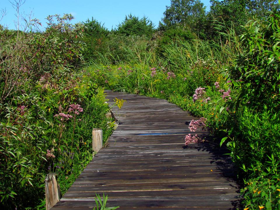 Norwegian Bay Conservancy boardwalk