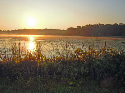 Silver Point Wetlands