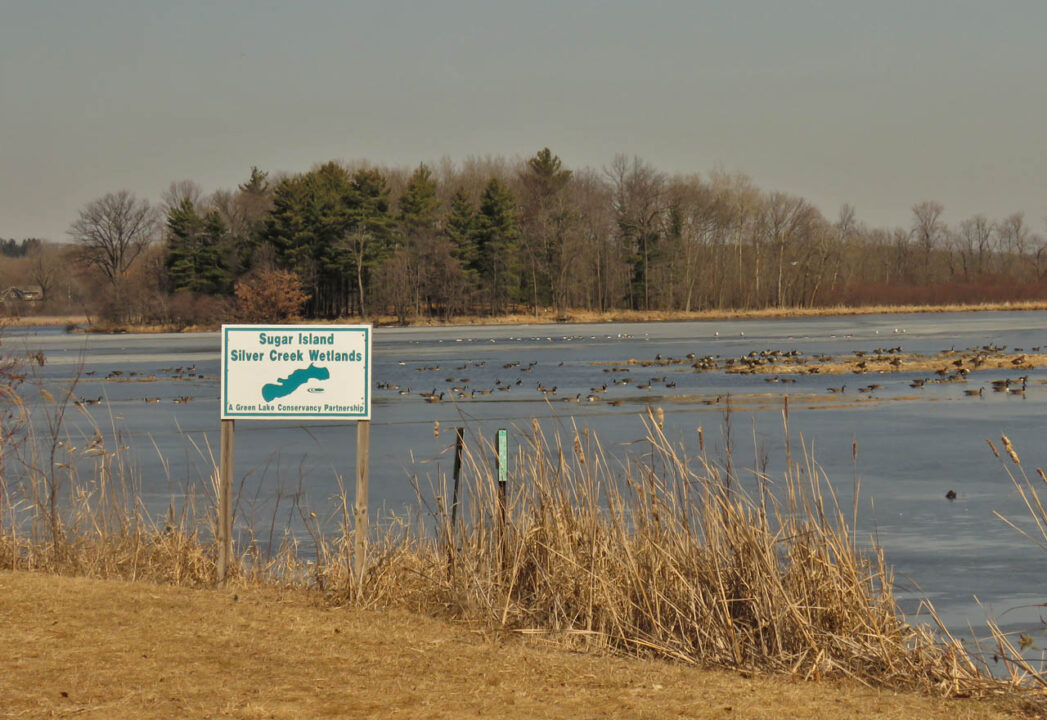 Sugar Island 3-24-15 waterfowl on the Inlet1