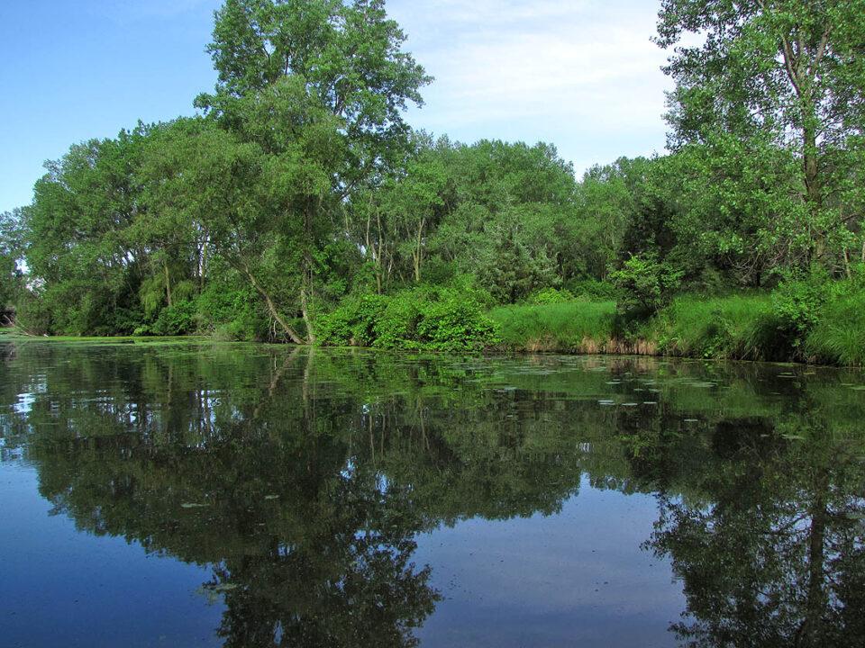 Sunnyside Conservancy lagoon