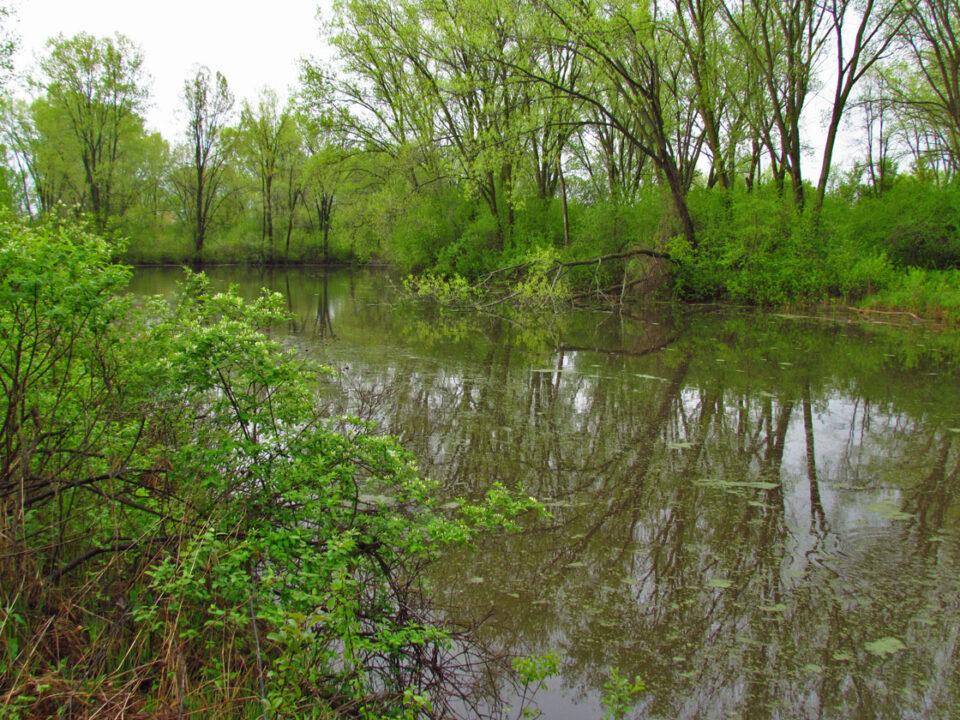 Sunnyside 5-3-12 lagoon in spring
