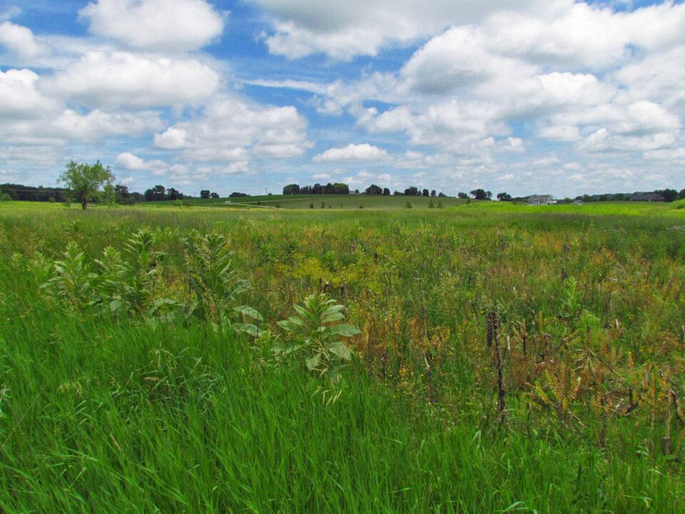 Sunnyside meadow 6-26-14 facing NE