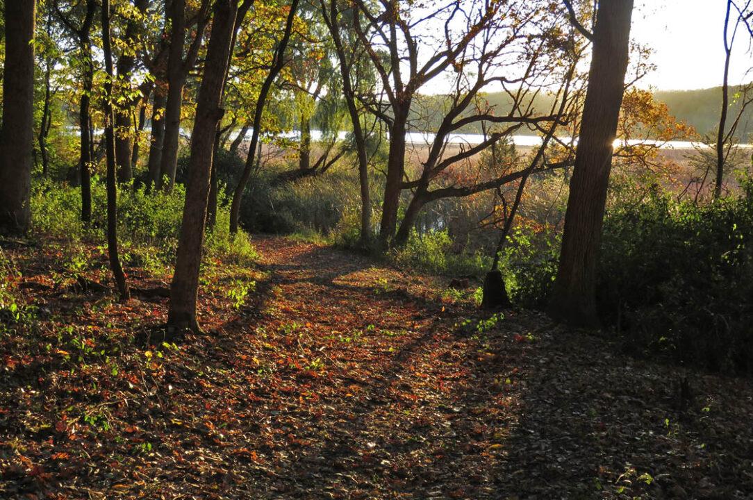 Tichora Conservancy 2018 10-21 8795 Spring Lake