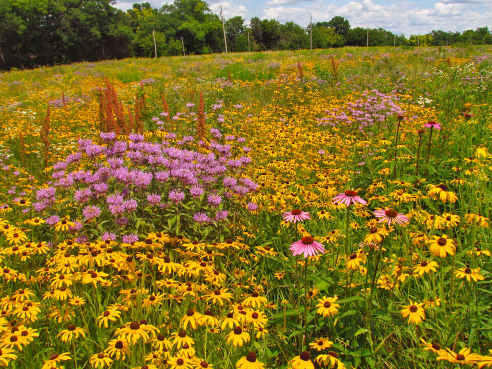 Tuleta Hills Conservancy prairie flowers 2