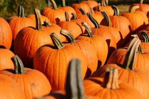 Halloween time - Pumpkin Patches