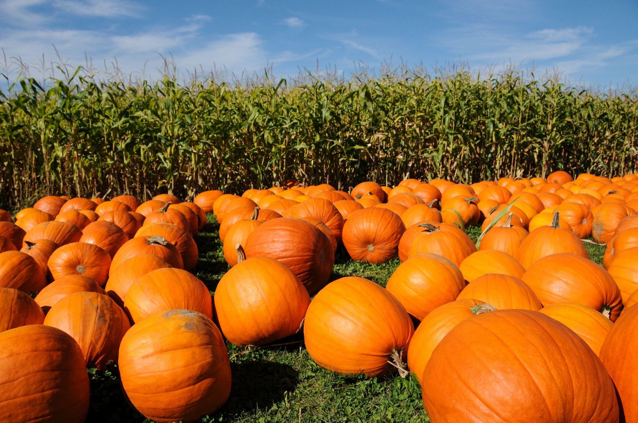 Would You Visit These Unique Pumpkin Patches?