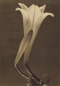 Tina Modotti, No.1, 1925, Getty