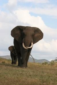 At the Elephant Encounter