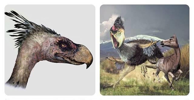 Un ave que reinó la Patagonia, una máquina de matar