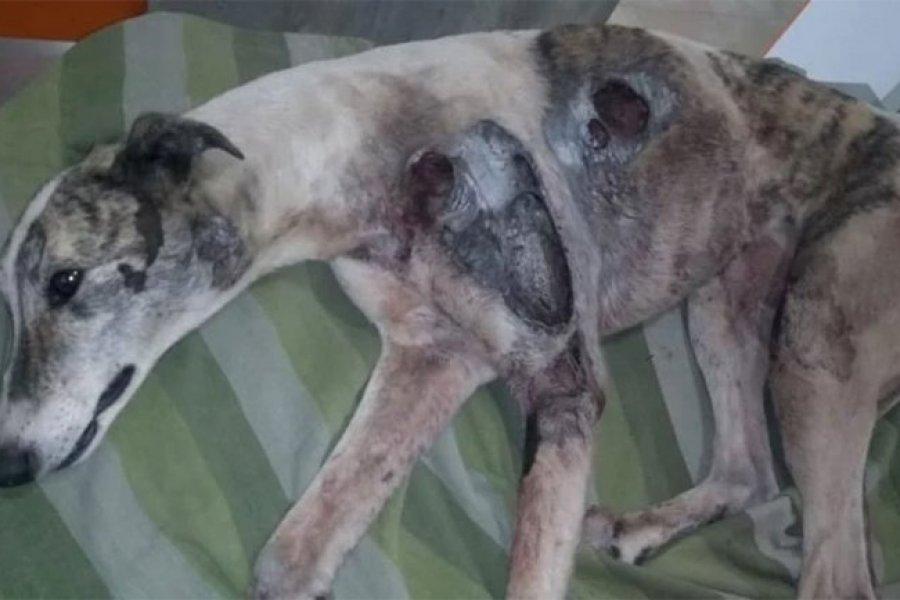Caso Estelita: el acusado culpable de crueldad animal