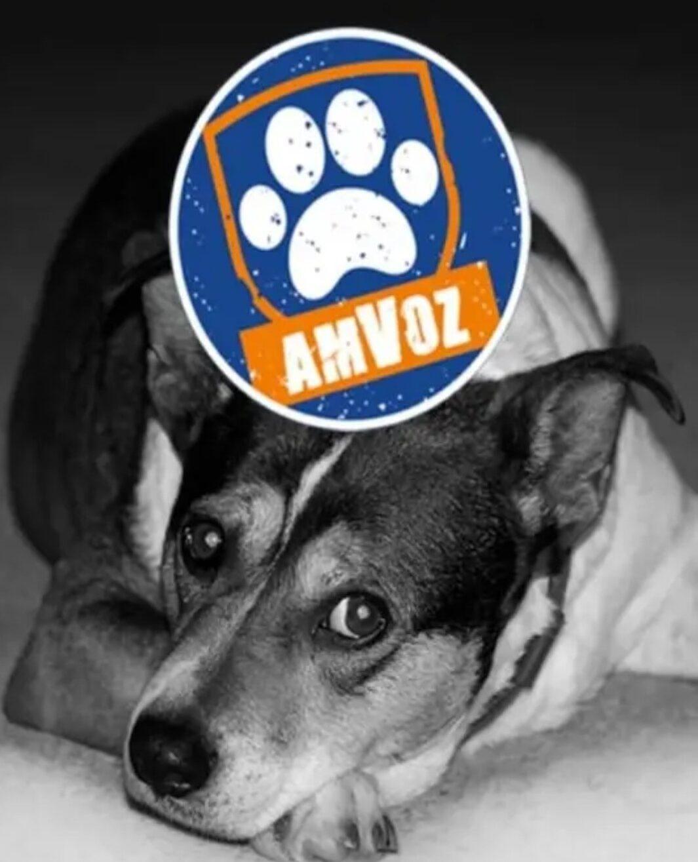 Avanzan en la creación de una app para denunciar maltrato animal