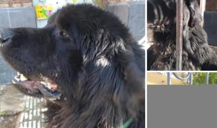 VIDEO: Aseguran que un hombre mató a un perro a patadas en pleno centro
