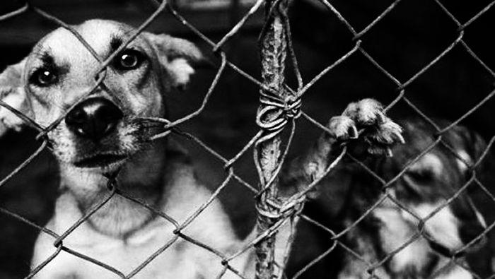 Maltrato Animal: Ató al perro al fondo del patio, lo dejó morir de hambre y lo prendió fuego