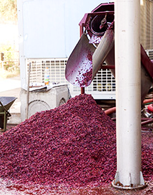Grape pulp that could be used for second run wines.