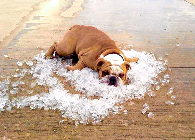 Keeping Cool While Brewing Beer In The Summer