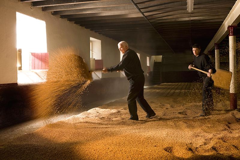 Maltster making malted barley.