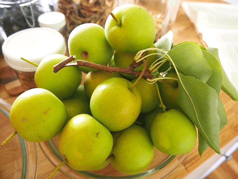 Pears For Making Wine