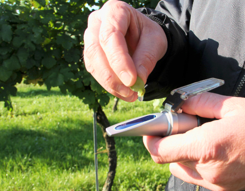 Refractometer With Grape Being Squeezed