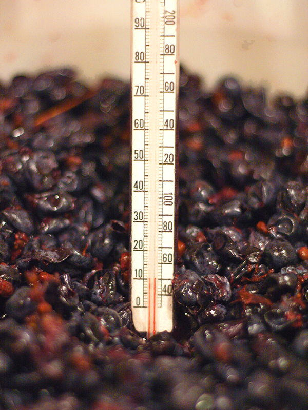Thermometer In Wine Must