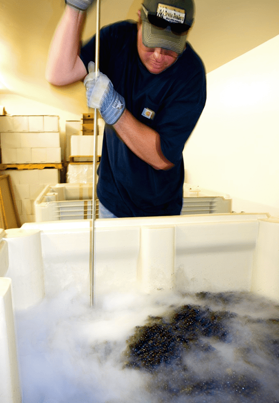 Winemaker Punching Cold Fermentation