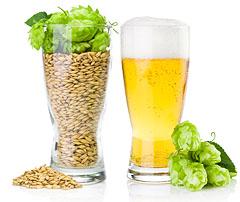 Beer, Barley, Hops
